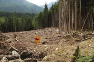 Micimackó otthona az erdőírás áldozata