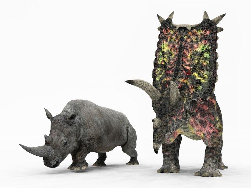 26_11_2014_pentaceratops.jpg__800x600_q85_crop