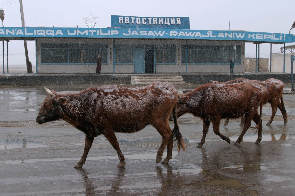 Karakalpakstan - Aral Sea