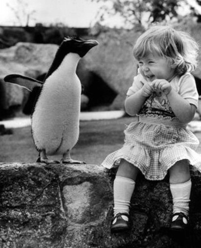 cute,penguin,little,girl,n,penguin,animals,baby,black,and,white-561077dfa16639390c7edb66b8ac7730_h
