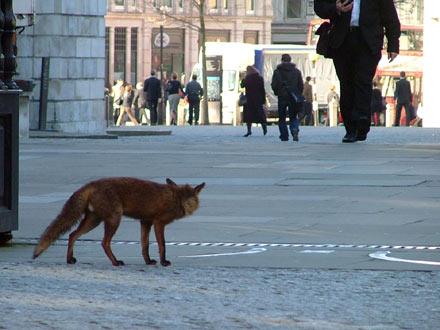 fox-city