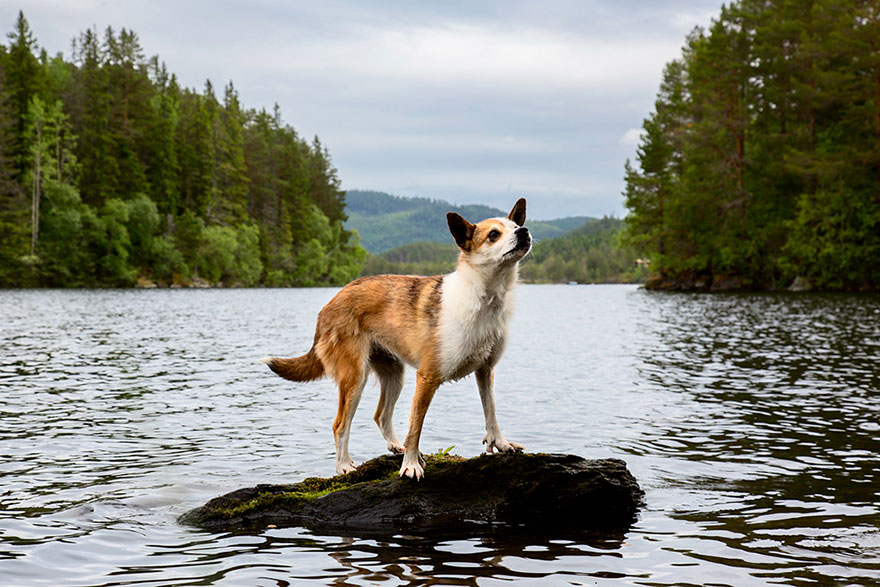 working-dog-photography-shepherds-realm-andrew-fladeboe-15