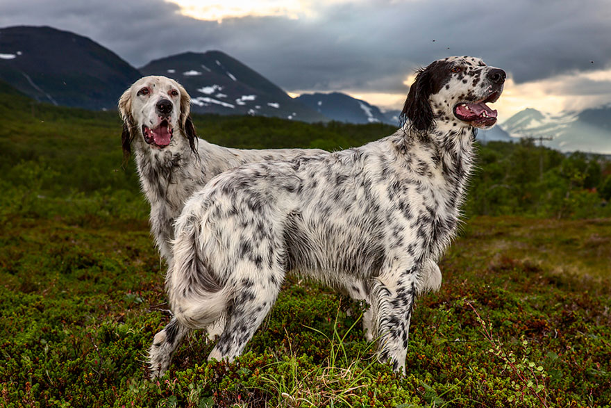 working-dog-photography-shepherds-realm-andrew-fladeboe-17