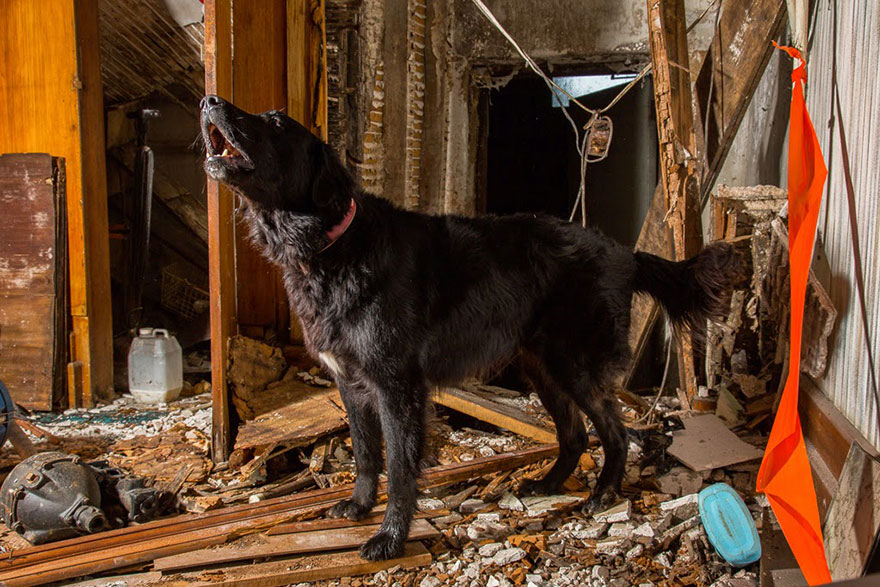 working-dog-photography-shepherds-realm-andrew-fladeboe-20