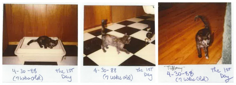 Polaroid-Collage-oldest-cat-tiffany_tcm25-371457