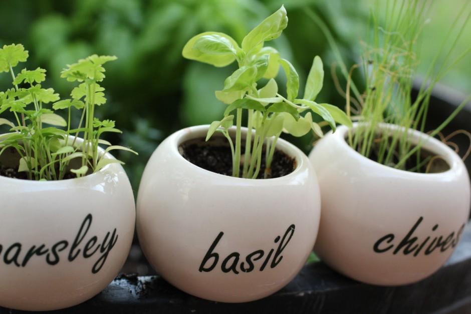 home-herb-garden