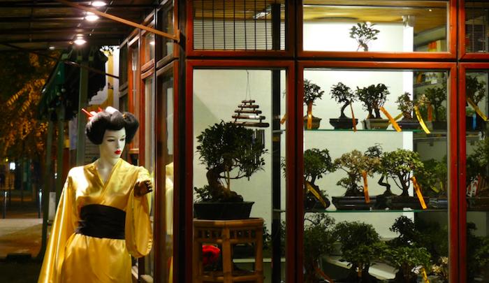 Fotó: bonsaihungary.hu