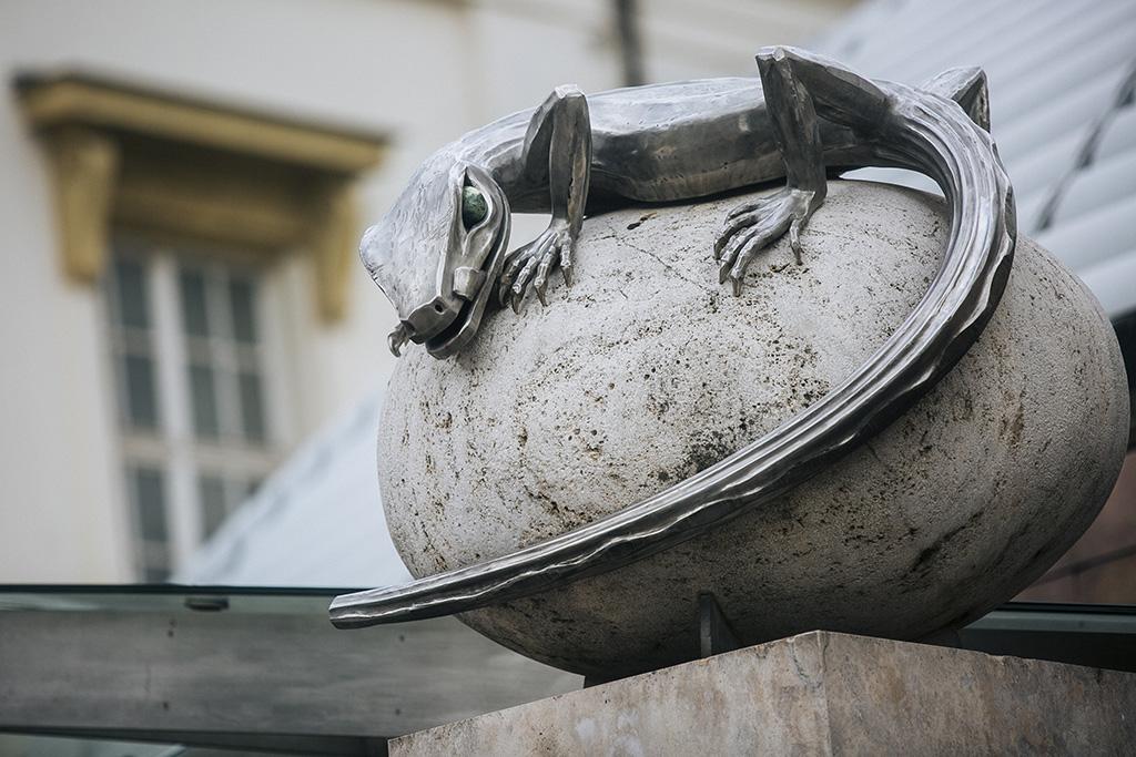 tojáson ülő hüllő Fotó: Horváth Péter Gyula