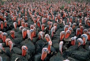 thanksgiving-day-turkey