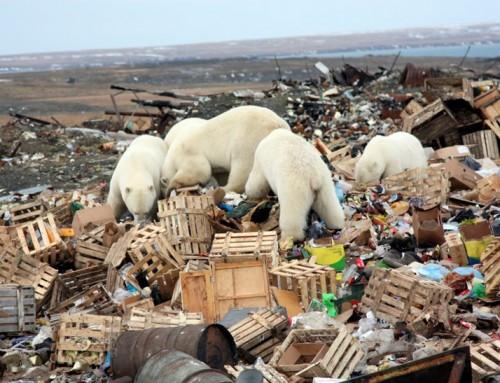 Öko- katasztrófa: Az Északi-sarkvidéken köt ki a vizekbe kerülő hulladék