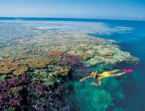 Felbecsülték a Nagy-korallzátony értékét