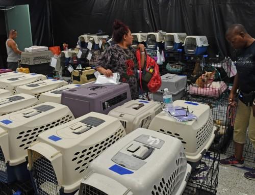 Kemény büntetés vár azokra, akik a hurrikán miatt hagyták el kedvencüket