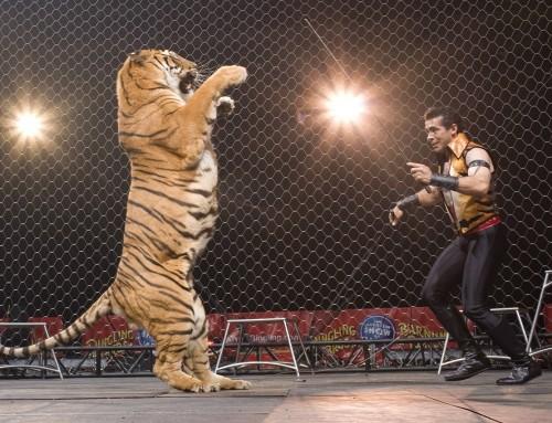 Betiltják a cirkuszi állatok szerepeltetését Olaszországban